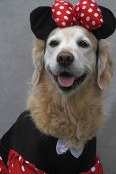 Grace best dog model