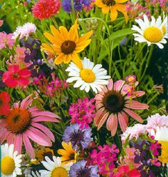 Plant this mix for cut flowers: Baby's Breath, Bachelors Buttons, Wildflower Siberian, Tree Mallow, Black-Eyed Susan, Blanket flower, Clarkia, Coreopsis Lanced-leaved, plain Coreopsis, Prairie Coneflower, Daisy Shasta Godetia, Annual Phlox, Purple coneflower, Sweet William.