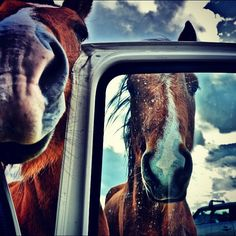 #newforest #horses #newforestponies #forest #car #fields #clouds #pony #carrots #sniff #cute #nostrils