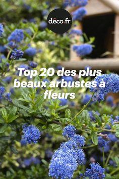 Balcony Plants, Balcony Garden, Herb Garden Design, Outdoor Flowers, Miniature Plants, Flowering Shrubs, Plantar, Gardening, Permaculture