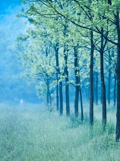-thatonekidchris: Evening Mist