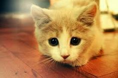 This is adorable I love this kitty I love it's eyes it is just soooo cute