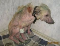 beautiful before and after images of rescued animals