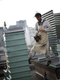 The beemaster at Fortnum and Mason, Steve Benbow, is at the forefront of the urban beekeeping movement and keeps hives at other altitudinous places like Tate Modern and the National Portrait Gallery. Raising Bees, Fortnum And Mason, National Portrait Gallery, Buckingham Palace, Queen Bees, Bee Keeping, Bradley Mountain, Teen, Urban