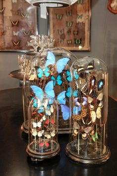 Lepidopterists will delight in these butterfly domes by Alex MacArthur