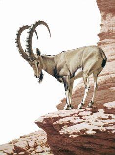 """""""Nubian Ibex"""". Guy Coheleach."""