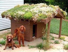 succulent roof for a dog house...make sure everything is pet safe. Maybe grass would be fun.