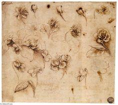 Leonardo Da Vinci >> Flower study  |  (Oil, artwork, reproduction, copy, painting).