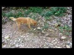 Best Trip in nature Adroni GREECE (Get Outside! Jason Farnham)