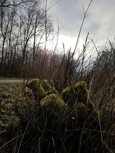 Vanmiddag even een boswandeling gemaakt in het Tenboersterbos. Hier even gestopt bij een onder mos begroeide boomknoest.  Vond het een mooi kleurrijk geheel vormen.