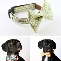 i must have this for my dog.