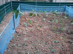 PICTURES..The Construction Of Free Range Snail Farming System. - Agriculture - Nigeria
