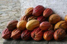 ジャン=ポール・エヴァン(JEAN-PAUL HEacuteVIN)から、産地別カカオのデギュスタシオン(食べ比べ)にフォーカスした「Voyage du cacao」コレクションが登場する。発売期間は...