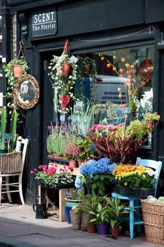 Flower Shop, Brighton, England.