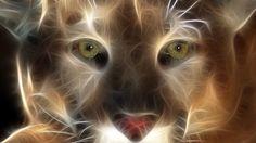 cougar animal | El puma, un cazador al acecho - en extinción