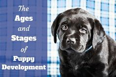 how to train your puppy to come every time