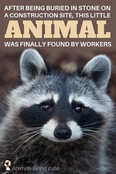 Little Animal Found By Workers After Being Buried In Stone On A Construction Site Inspirational Animal Quotes, Interesting Animals, Animal Facts, Wildlife Conservation, Body Heat, Find Pets, Diy Stuffed Animals, Bury, Dog Owners