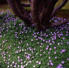 purple stars by Scott Everett