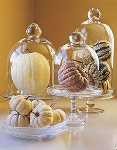 Pic of pumpkins under bell jars...