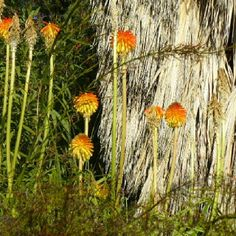 #colorscostabrava #jardibotanic #marimurtra #blanes