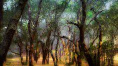 Foothill Regional Park | Foothill Regional Park near Windsor, California (© Ron Koeberer ...