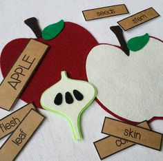Parts of an Apple felt board learning set from Circle Time Designs https://www.etsy.com/listing/248793294/parts-of-an-apple-felt-board-learning                                                                                                                                                                                 More