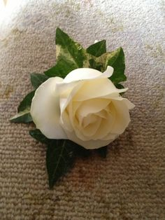 White rose with ivy leaves.