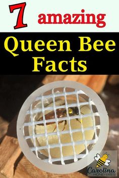 Amazing queen bee facts that you may not know, Bee Facts, Beekeeping For Beginners, Raising Bees, Backyard Beekeeping, Sites Online, Save The Bees, Bee Happy, Bees Knees, Flirting Quotes
