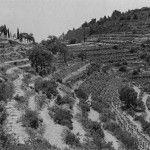 αμπελια στην κυψελη Old Photos, Greece, Nostalgia, Outdoor, Memories, Vintage, Old Pictures, Greece Country, Outdoors