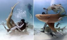 Expert provokes sharks to attack so he can show off survival skills