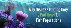 Why Disney's Finding Dory is Bad News for Fish Populations Disney Finding Dory, Marine Conservation, Bad News, Fish, Blog, Blogging