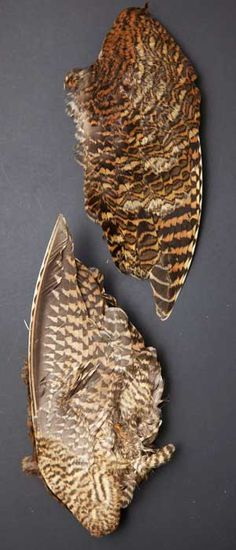 snipe bird skin full whole flytying materials craft