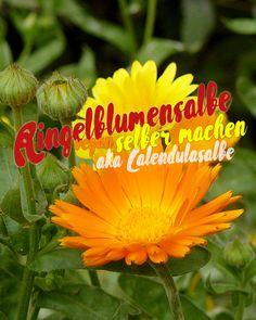 Rezept für Calendulasalbe aka Ringelblumensalbe | Schwatz Katz