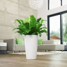 Rondo 32 Self Watering Planter by Lechuza at Lumens.com