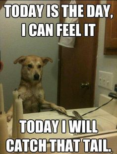 Hilarious Dog Memes   Monday and who doesn't need a laugh? Here are 25 funny dog memes ...