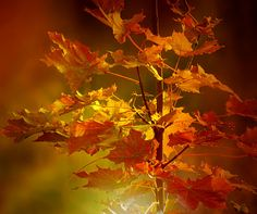 red leaves by SvitakovaEva