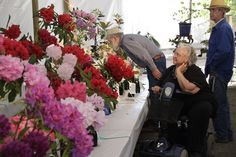 Rhododendron show and sale, first weekend in May, photo by Richard Jones, ARS Noyo #fortbraggca