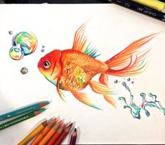 Goldfish, Lucky978, Dibujo