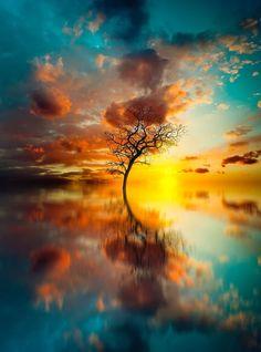 Holy Tree by Stijn Dijkstra Photography Beautiful Sunset, Beautiful World, Beautiful Images, Amazing Photography, Landscape Photography, Nature Photography, Image Nature, Nature Pictures, Belle Photo