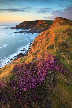 ~~Smoothlands ~ Wonderful warm sunlight hits bell heather above hartland point lighthouse, North Devon, England, UK by Stephen Sellman~~ Visit Devon, Devon Uk, North Devon, Devon Coast, Devon England, Between Two Worlds, Around The Worlds, Beautiful World, Beautiful Places