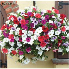 200 unids wholesale colgando semillas de Petunia pétalos de Petunia semillas de flores de plantas semillas de petunia del jardín