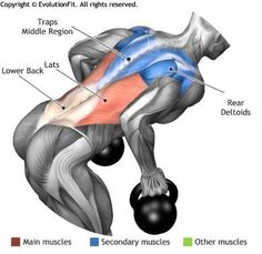 LATS - BENT OVER TWO KETTLEBELL ROW