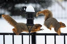 Get your claws off my nuts by daveantphoto, via Flickr