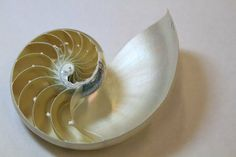 eashells are pretty tough cookies, and now researchers may know why: The mother of pearl that coats the inside of the shell is arranged in a brickwork structure that makes the shell both tough and strong.