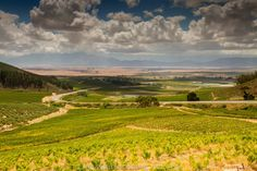 Winelands at Riebeeck Kasteel, Western Cape by Nik on Cape Town, West Coast, Southern, Africa, Spaces, Photography, Outdoor, Outdoors, Photograph