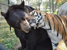 30 Completely Unlikely But Real Animal Friendships - Gallery