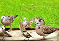 Beware of the backyard bird feeder - Conservation