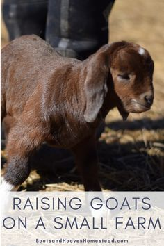The ultimate list of resources to help get started with raising goats on a small farm. Tips for baby goat care pregnancy and postpartum care what to feed goats shelter for goats breeds and more. Raising Cattle, Raising Goats, Backyard Farming, Chickens Backyard, Goat Feeder, Alpine Goats, Keeping Goats, Goat Shelter, Goat Barn