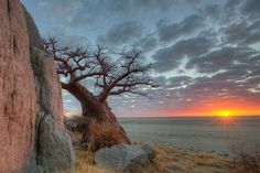 BOTSWANA - Kubu Island - The entire area is considered a sacred site by locals. Kubu means hippopotamus in Tswana. One of my favourite place I have visited! Baobab Tree, Africa Travel, Night Skies, Sunsets, Scenery, Hippopotamus, Island, Places, Minerals