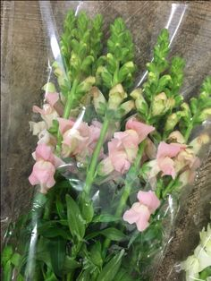 'Maryland Pink' Snapdragon. Sold in bunches of 10 stems from the Flowermonger the wholesale floral home delivery service.